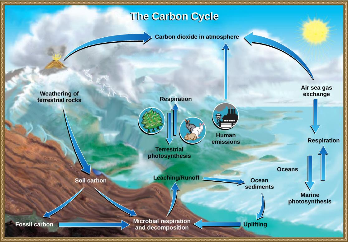 Biogeocycles water cycle carbon cycle nitrogen cycle iasmania carbon cycle ccuart Gallery