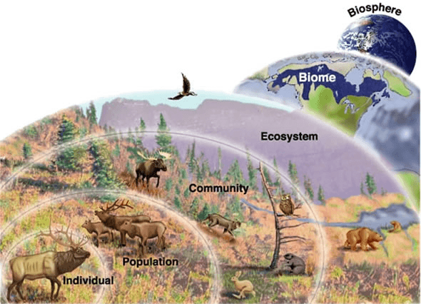 Diverse ecosystem