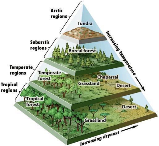 Forest Ecosystem Iasmania - Civil Services Preparation ...