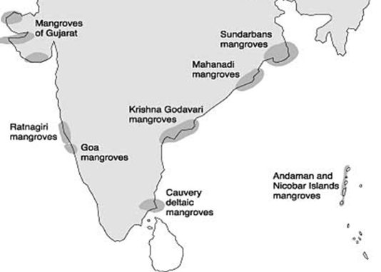 Mangroves-in-India