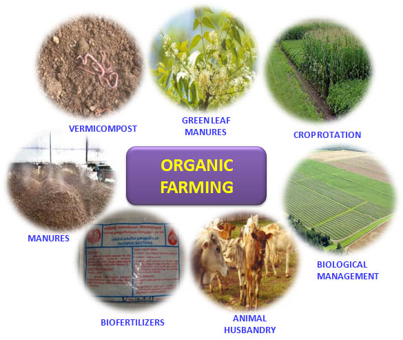 Indian Agriculture Organic Farming