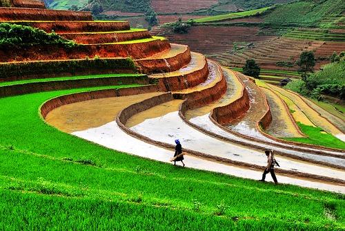 Soils in india iasmania civil services preparation for Terrace farming images