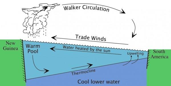 Walker Circulations in Pacific