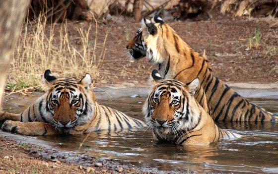 Manas Wild Life Sanctuary